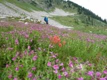 flower fields in Hilda basin .5