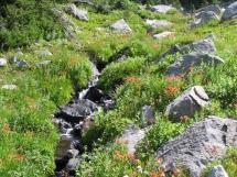August alpine flowers