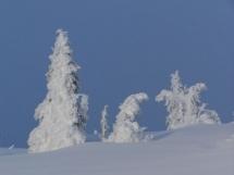 snow goons